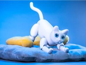 Dự án robot mèo gây sốt trên Kickstarter