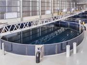 Nhà đầu tư Israel muốn sản xuất 10.000 tấn cá hồi mỗi năm tại Việt Nam
