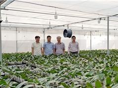 """Quảng Trị: Những kết quả bước đầu trong phát triển nông nghiệp công nghệ cao tại """"tiểu Đà Lạt"""""""