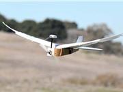 Drone bay tốt hơn nhờ gắn lông chim bồ câu