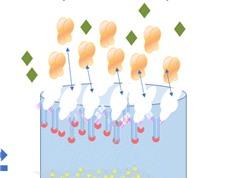 Giải pháp tạo khuôn phân tử cho cảm biến sinh học