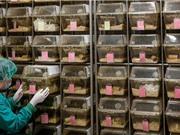 Bắt đầu thử nghiệm trên chuột vắcxin ngừa virus corona chủng mới