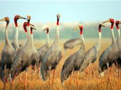 Phê duyệt nhiệm vụ lập Quy hoạch bảo tồn đa dạng sinh học