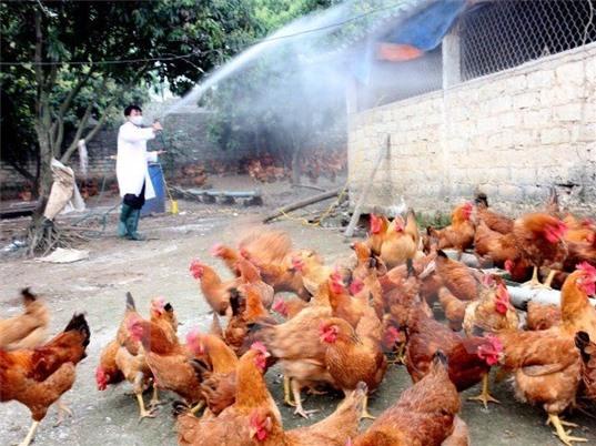 Học viện Nông nghiệp Việt Nam triển khai nghiên cứu đột xuất về cúm gia cầm A/H5N6