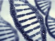 Trung Quốc khởi động dự án hệ gene sinh vật đơn bào