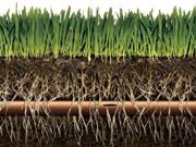 Hệ thống tưới ngầm kết hợp bón phân tự động