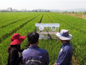 Chuyển đổi cây trồng, vật nuôi thế mạnh ở Lâm Hà