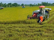 Ứng dụng KH&CN trong cơ giới hóa và chế biến nông nghiệp: Làm sao để đồng bộ?