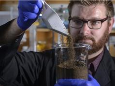 Miếng bọt biển: giải pháp cho sự cố tràn dầu