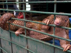 WWF châu Á Thái Bình Dương kêu gọi chấm dứt buôn bán và tiêu thụ động vật hoang dã