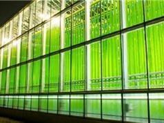 Trung Quốc sản xuất triacylglycerol bằng vi tảo trên quy mô công nghiệp