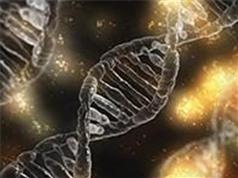 Phát hiện đột biến gien khiến sức chịu đựng dẻo dai của con người suy giảm