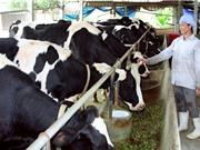 Ứng dụng giúp giảm phát thải khí nhà kính cho chăn nuôi