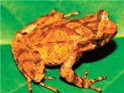 Nhà khoa học Việt Nam tham gia phát hiện hai loài mới