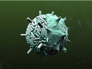 Thế hệ pin tương lai được sản xuất bằng virus
