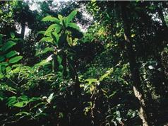 Rừng mưa nhiệt đới lớn thứ 2 thế giới mất dần khả năng hấp thụ carbon dioxide