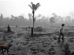 Các hệ sinh thái lớn như Amazon 'có thể sụp đổ trong vài thập kỷ'