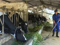 Phần mềm PC Dairy VN 2019 giúp giảm phát thải và chi phí chăn nuôi bò