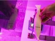 Cá 3D từ gel đạn đạo