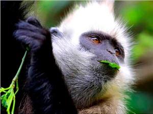Việt Nam bảo vệ các loài động vật nguy cấp