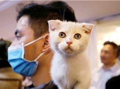 Mèo bị nhiễm Covid-19 từ chủ