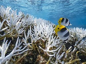 Nước biển ấm lên ảnh hưởng đến sự phân bố của sinh vật biển
