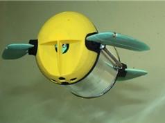 Giám sát trại nuôi cá bằng robot rùa biển