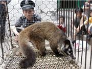 Phần lớn người Việt ủng hộ đóng cửa thị trường buôn bán động vật hoang dã