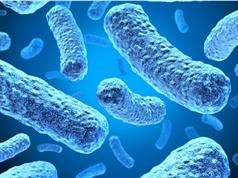 Dùng vi khuẩn phát điện làm pin biohybrid