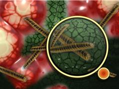 Giải mã cơ chế diệt khuẩn của phân tử ion bạc