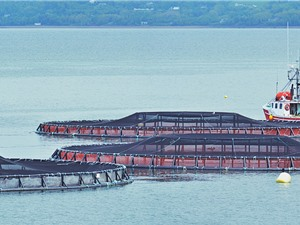 Singapore thúc đẩy nuôi trồng thủy sản bền vững