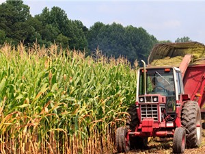 Ứng dụng ảnh vệ tinh để đánh giá thực trạng sản xuất và dự báo năng suất trên cây ngô
