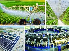 Sáng chế trong xu thế công nghệ xanh: Những giải pháp từ nhiều hướng tiếp cận