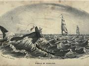 Mocha Dick: Chú cá voi huyền thoại