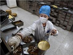 Trung Quốc quảng bá các phương thuốc cổ truyền trong điều trị COVID-19 dù chưa chứng minh được hiệu quả