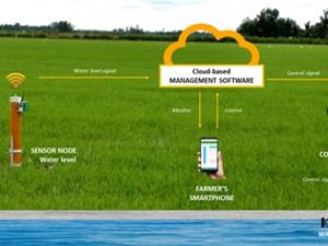 Thí điểm hệ thống IoT giúp nông dân tiết kiệm nước tưới lên tới 20%