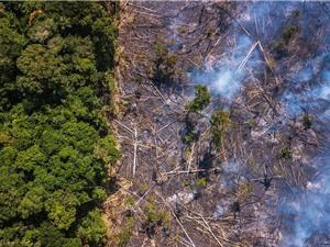 Rừng Amazon có thể là nơi tạo ra đại dịch tiếp theo