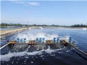 Chế phẩm sinh học xử lý nước bị nhiễm amoni