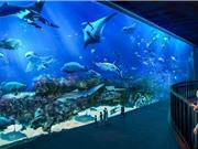 Singapore: cường quốc cá cảnh của thế giới