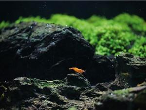 Đài Loan trở thành thủ phủ nghiên cứu cá cảnh nhờ khoa học