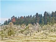 Cây rừng trên khắp thế giới đang bị trẻ hóa