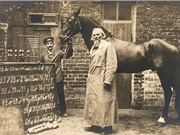 Clever Hans: chú ngựa biết làm toán