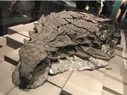 """Hóa thạch tiết lộ bữa ăn cuối cùng của loài """"rồng ngủ"""""""