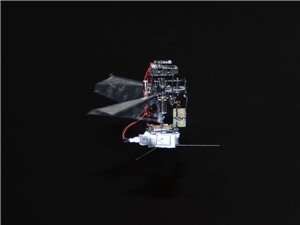 KUBeetle-S: Robot côn trùng có thể bay liên tục trong 9 phút