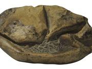 Phát hiện hóa thạch trứng thằn lằn lớn nhất thời đại khủng long