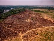 Diện tích rừng Amazon bị tàn phá tăng lên mức kỷ lục