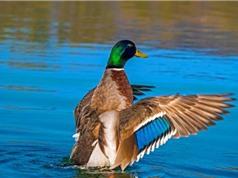 Cá di cư nhờ hệ tiêu hóa của chim