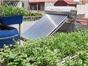 Mô hình liên hoàn xử lý rác để trồng rau tại gia đình