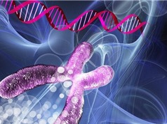 Trung Quốc phát triển hệ thống chỉnh sửa gene mới
