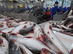 Tách chiết collagen từ da cá tra: Lọc triệu đô từ 'phế phẩm'